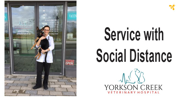Yorkson Creek Veterinary Clinic – Service with Social Distance